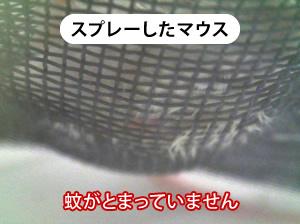 スプレーしたマウスの画像(蚊がとまっていません)